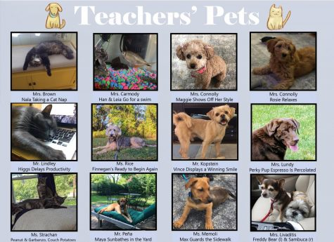 Photo Journal: Teacher's Pets